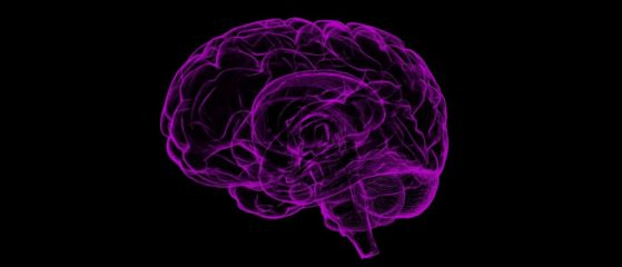 Gesundes Gehirn