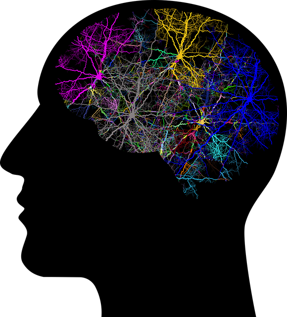 Gehirn System