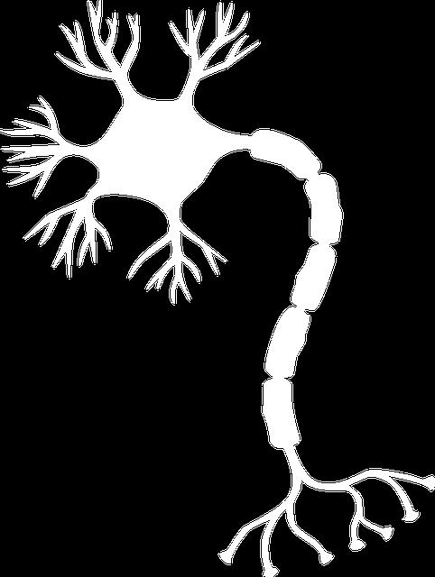 Aufbau Gehirn Neuron