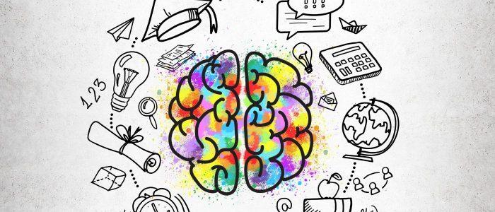 Aufbau des Gehirns neobeats